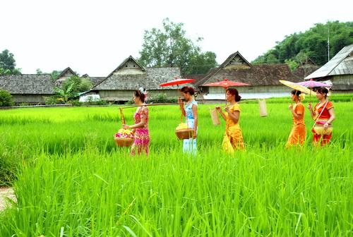 行走在田間地頭的傣族姑娘