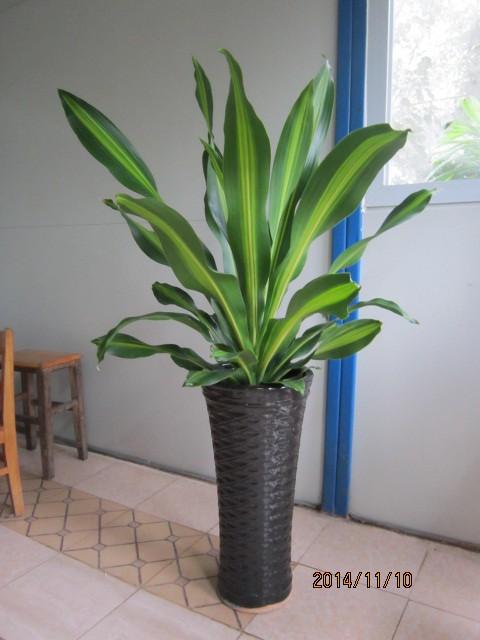 中山室内植物(图)